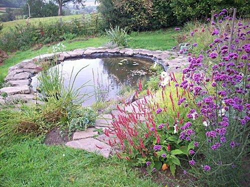 Pond in garden of Edgton b&b